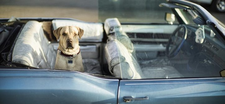 Dog-friendly Lifestyle Cars Features that Every Pet Owner Should Know